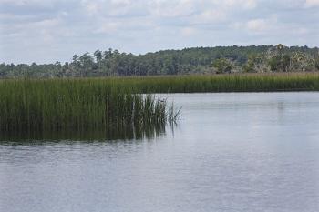 Salt Marsh Resized.jpg